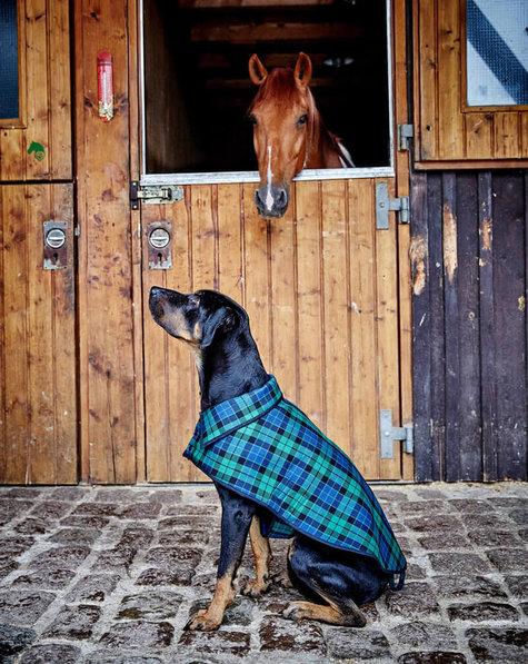 Dog Coat 6060 60 Sewing Patterns BurdaStyle Inspiration Dog Jacket Pattern