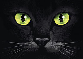 Black-cats-eyes_show