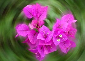 Flower_show