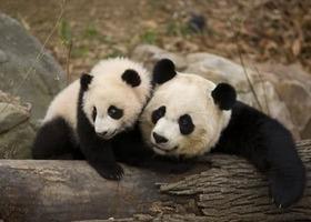 Pandas_show