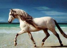 Beach_horse_show