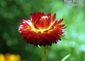 Flower385_show