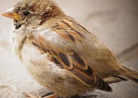 Shy-bird-public-domain-picture_show