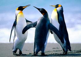 Penguins_show