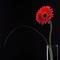 Red_flower_sq_thumb