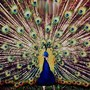 Peacock_1_large