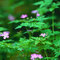 Forest_flowers_thumb