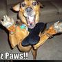 Jazz_paws_large