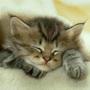 Gato_durmiendo_1024_large