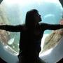 Aquarium2_large