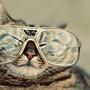 Hep_cat_large