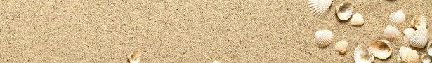 Beach_sand_and_shells_background_show