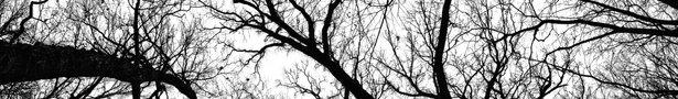 Pecan_grove_black_and_white-wallpaper-1920x1080_show
