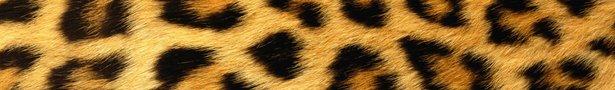 Leopard_print_background-1440x900_show