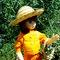 Orange_doll_005_grid