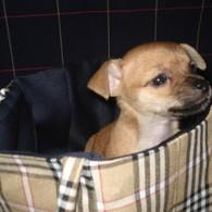 Doggie_bag_listing