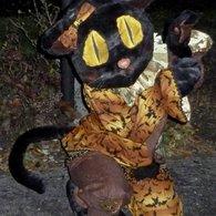 Cat6_listing