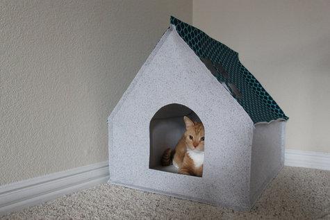 Cathouse1_large