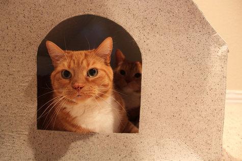 Cathouse5_large