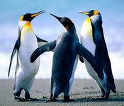 Penguins_listing