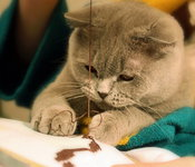 Cat-sewing-embroidery-funny-kitty-animals_listing